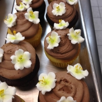 16004 Chocolate with White Violets Flowers Cupcakes